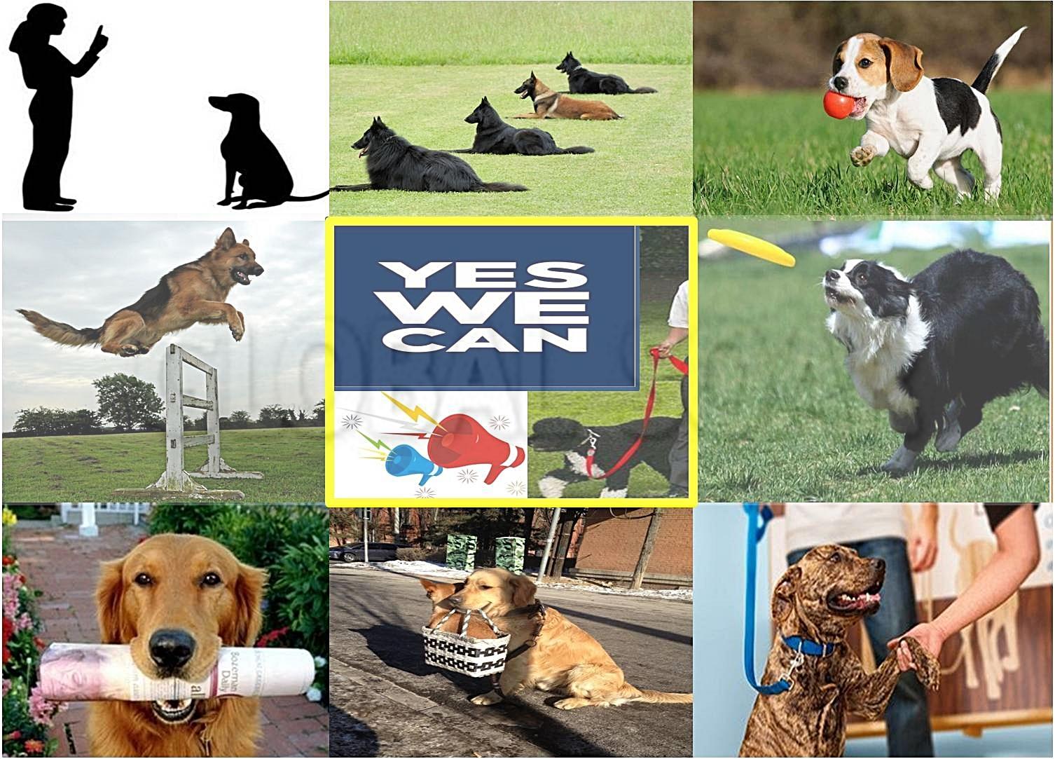 dog-ad2-2.jpg
